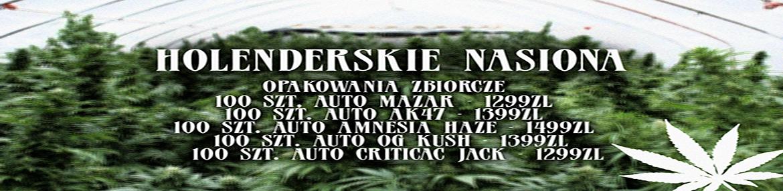 Nasiona holenderskie